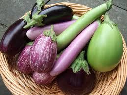 Various Eggplants