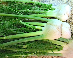 Fabulous Fennel: Big Health Benefits from Dr. Oz's Fennel Tea, Ina Garten's Crusty Fennel Casserole & Raw Fennel Salad